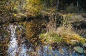 das Moor in der Sterntaler Filze in Bad Feilnbach