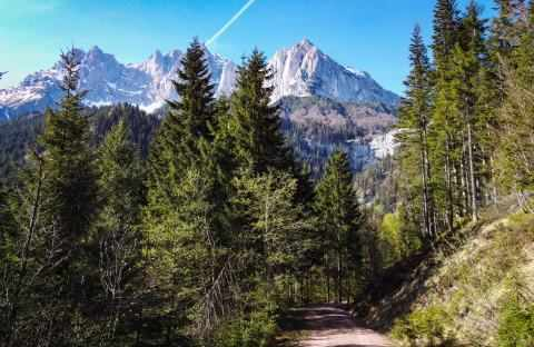 Waldweg zum wilden Kaiser