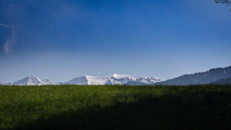 gruene Wiese im Fruehjahr und im Hintergrund die weißen Berge