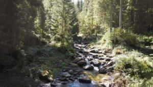 Bachlauf im Wald mit großen Steinen