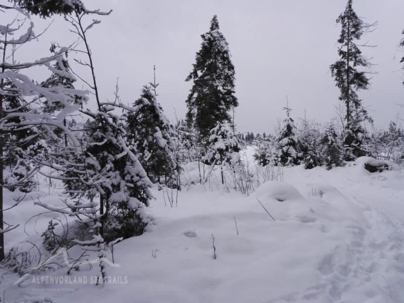 verschneite Bäume in Tirol