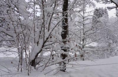Schnee auf Strauch