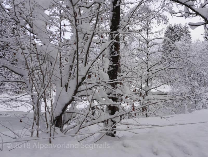 dick Schnee auf Strauch