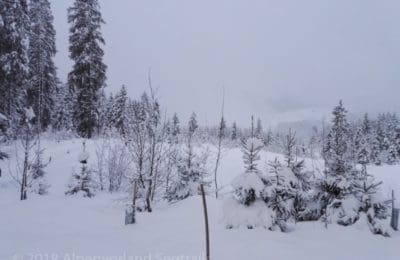 Wald im Schnee