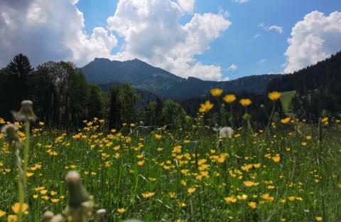 Blumenwiese in den Bergen bei Fischbachau