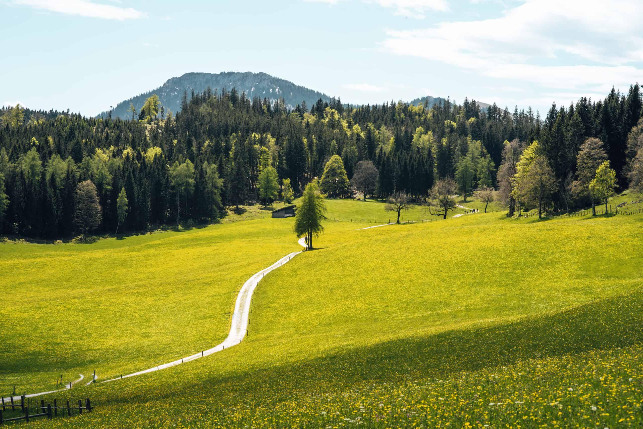 Der Bergfrühling in Bayern