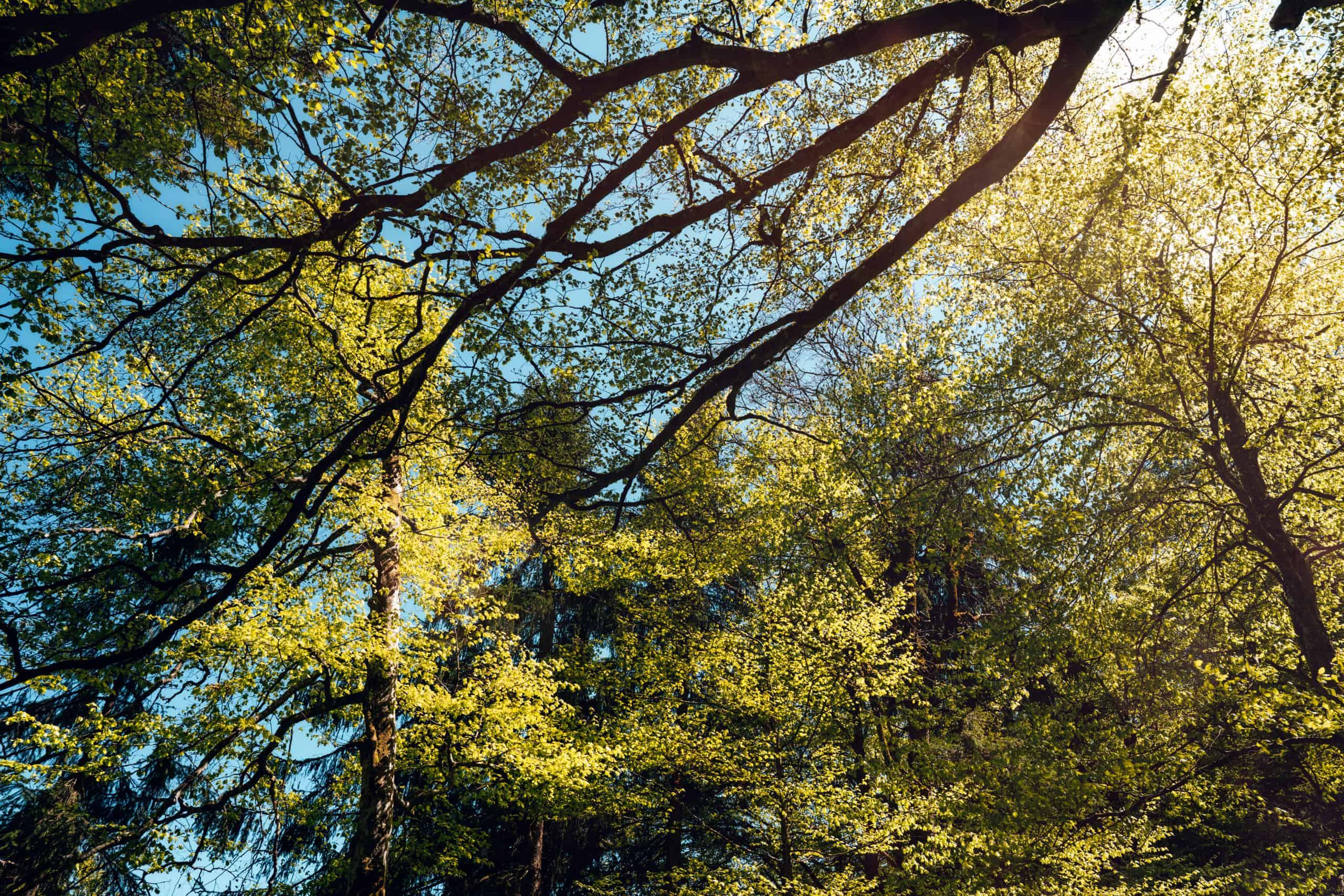 Strahlendes Licht im Wald